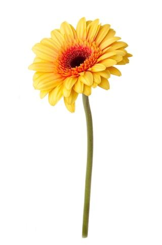 vad betyder olika blommor