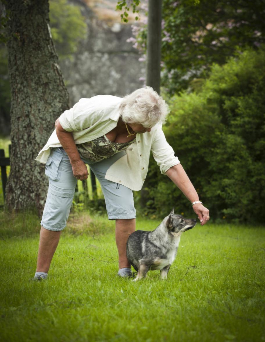 """<span style=""""text-decoration: underline;""""><strong>TRICK: SNURRA RUNT</strong></span><br><strong>Steg 1: Tydliga rörelser. </strong>Håll  lockbetet i handen strax framför/över hundens nos och gör en tydlig  rörelse i en vid båge åt det håll du vill att hunden ska röra sig.  Hunden kan stå eller sitta, beroende på vad som passar din hund bäst.  Belöna direkt när hunden gör rätt. Säg """"snurra"""" samtidigt som du gör  armrörelsen. Upprepa tills hunden har förstått.<br><strong></strong>"""