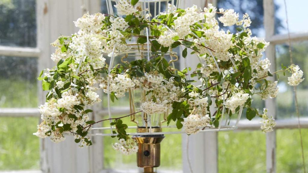 Belysning i växthuset skapar mysig stämning på kvällarna. En vanlig golvlampa skapar rumskänsla. Här har vi klätt en lampskärm med blommande spirea, håller för en kväll och blir effektfullt när lampan är tänd.