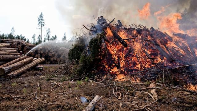 Wildfire dejtingsajt