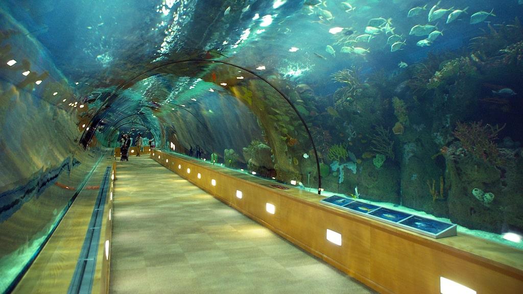 I stället för passkontroll kommer resenärer gå genom en akvarietunnel. Genrebild.