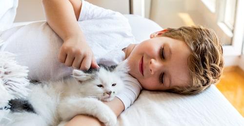 Bästa kompisar! Katter och barn kan gå bra ihop – det viktiga är att föräldrarna lär sina barn att respektera katten.