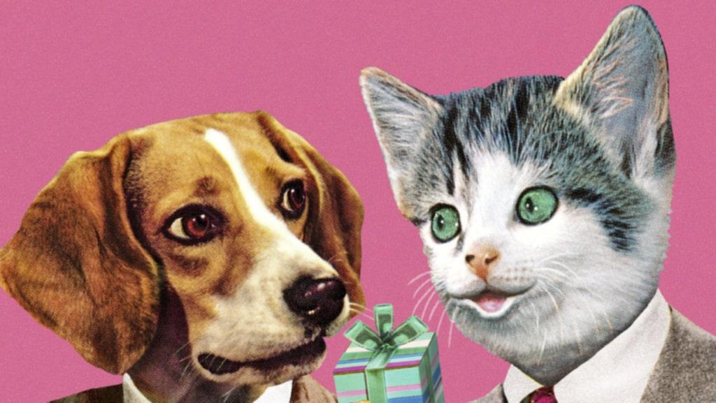 En ny studie slår dock fast: hundar älskar sina människor fem gånger så mycket som katter.
