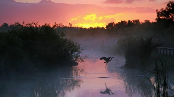 Gör en bilutflykt och spana in träskmarkerna i Everglades.