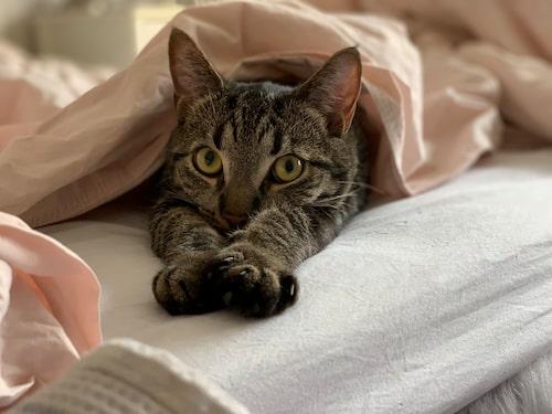 Huskatten Elvis är väl hemmastadd i den ljusa lägenheten, som går i vitt och pastellfärger. Katten kommer från Skokloster och fyllde ett år 1 juli. Han har även ett eget Instagramkonto, @katten.elviss.