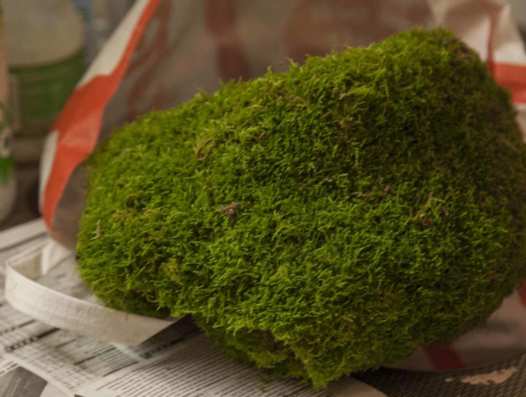 Använd dig av en stor bit fin, grön mossa.