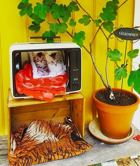 Eller varför inte låta den gamla tjockteven komma till användning? Se 13 fyndiga tips på katt-sovplatser nedan.