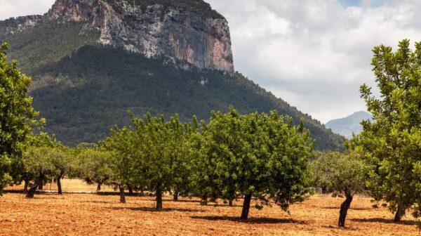 Naturen runt byn Alaró är vacker och dramatisk.