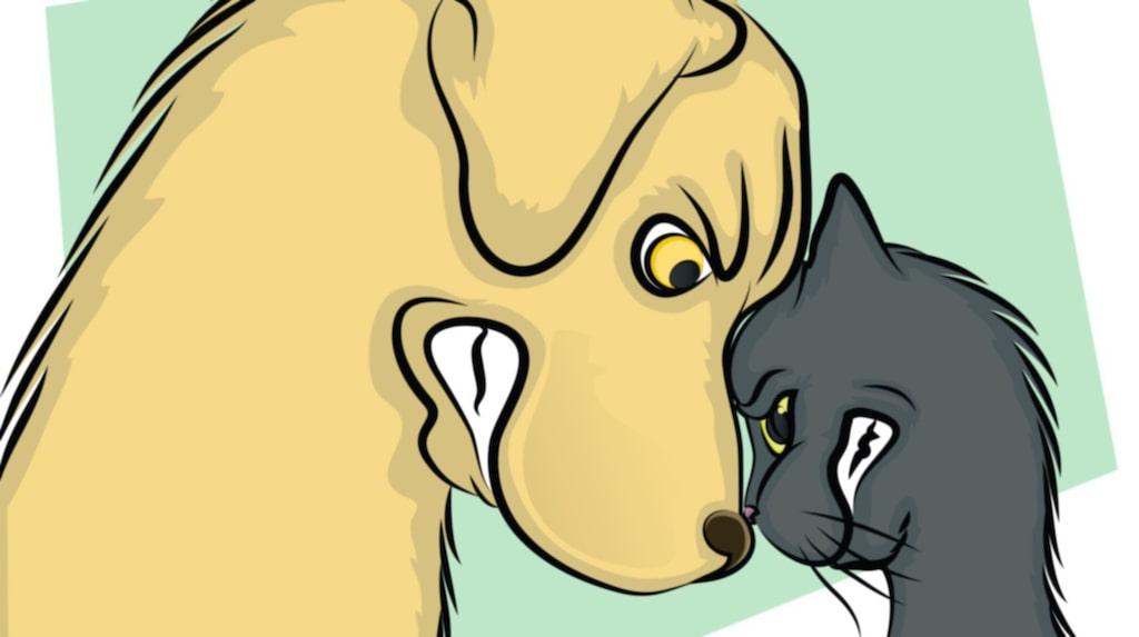 <p>Hund- och kattägare har varit i luven på varandra sedan urminnes tider: Vilket djur är egentligen det bästa husdjuret?</p>