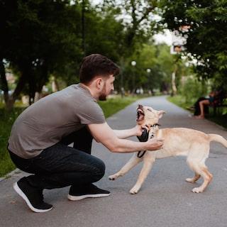 hur får jag hunden att sluta skälla