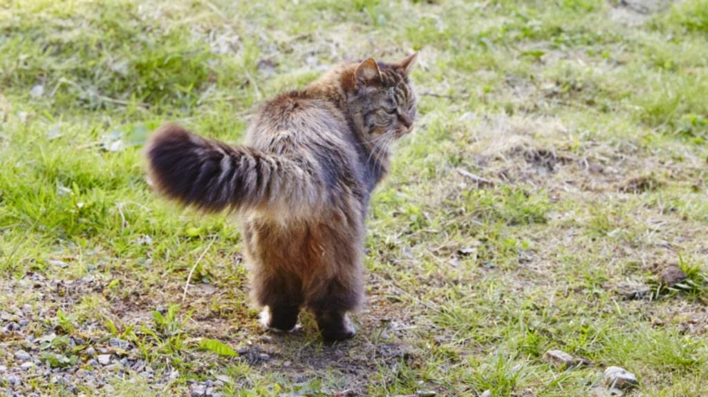 Första sommaren blev familjen med katt. De letade förgäves efter ägaren och knackade på vartenda hus i närheten. Morris som de döpt katten till, fick följa med till Malmö efter sommaren och nu tillhör hon familjen.