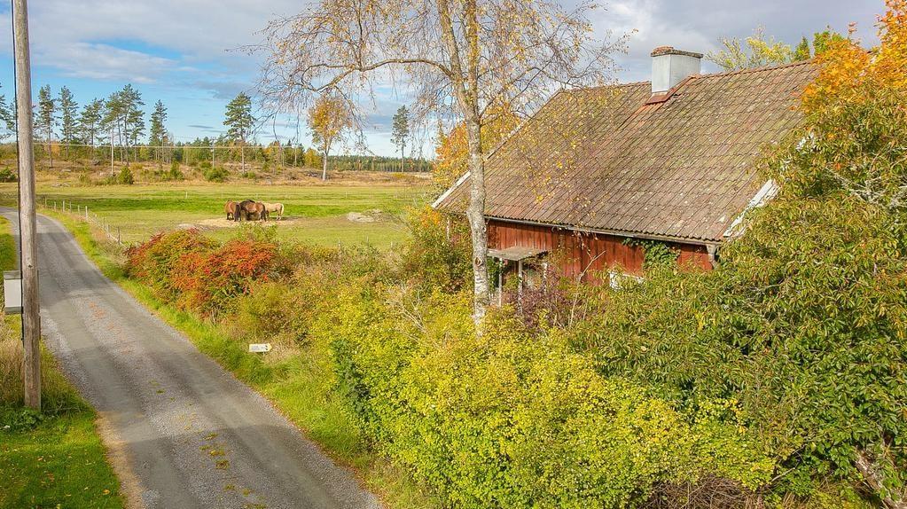 Liten landsväg bredvid, annars lummigt, grönt och massor av natur och betesmarker.
