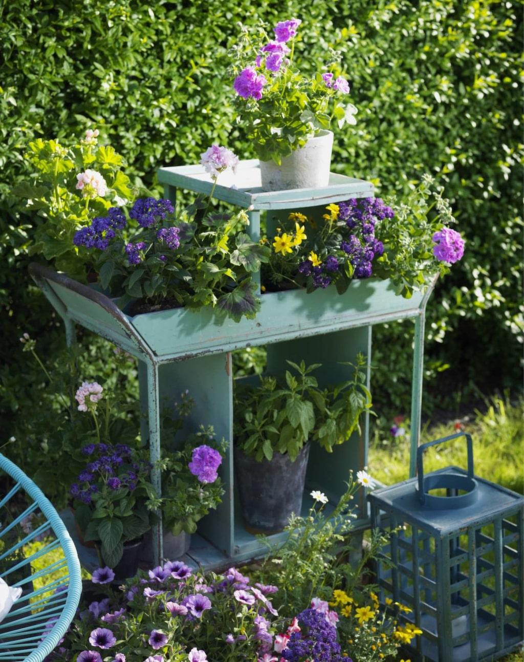 Ton i ton. Trenden att odla ätbara växter fortsätter. Mixa med blommande krukväxter och skapa ett överflöd av färgglada grupper.
