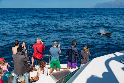 Från hamnen i Los Gigantes utgår det valsafaris.