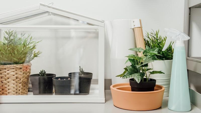 Små, söta och snygga växthus har även blivit populära inredningsdetaljer.