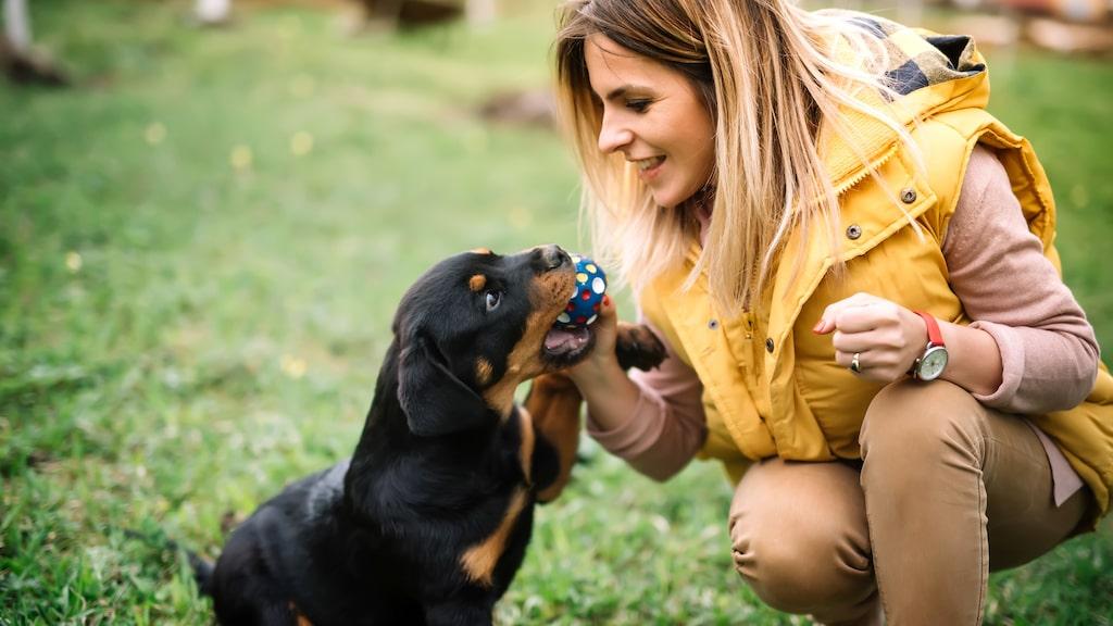 Gör testet som hjälper dig att välja rätt när det är dags att skaffa hund.