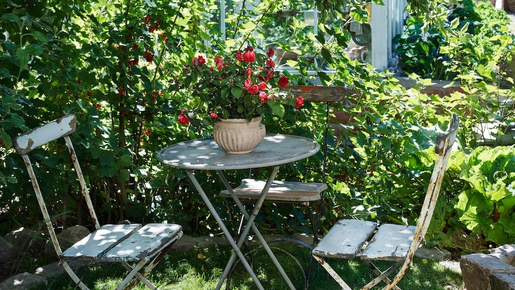 Sävstaholm-äppelträdet ger en välkomnande skugga vid den lilla uteplatsen.