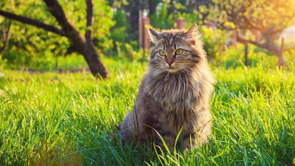 Katter är underbara djur men alla vill inte ha dem i sin trädgård...