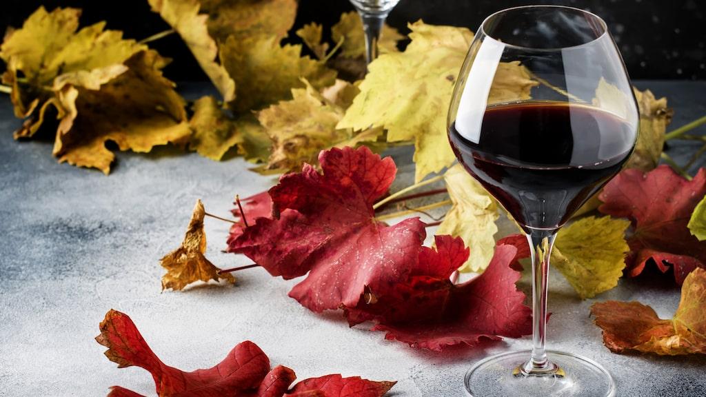 """""""Vinerna från Rioja har aldrig smakat så bra som nu"""", säger Håkan Larsson."""