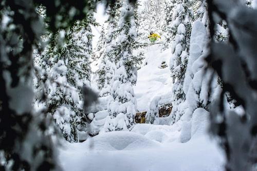 Skogsåkning i Åre när den är som bäst. Vill du pricka en meter nysnö är det störst chans i januari.