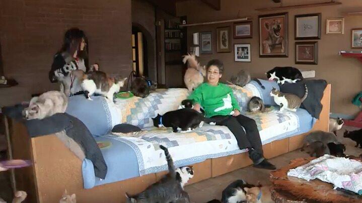 Det gäller att ha en stor soffa när man har så många katter som vill göra sällskap.