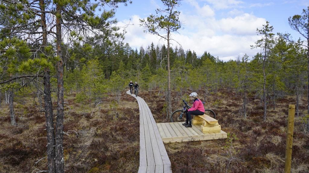 Cykling med vildmarkskänsla över myrmarkerna.