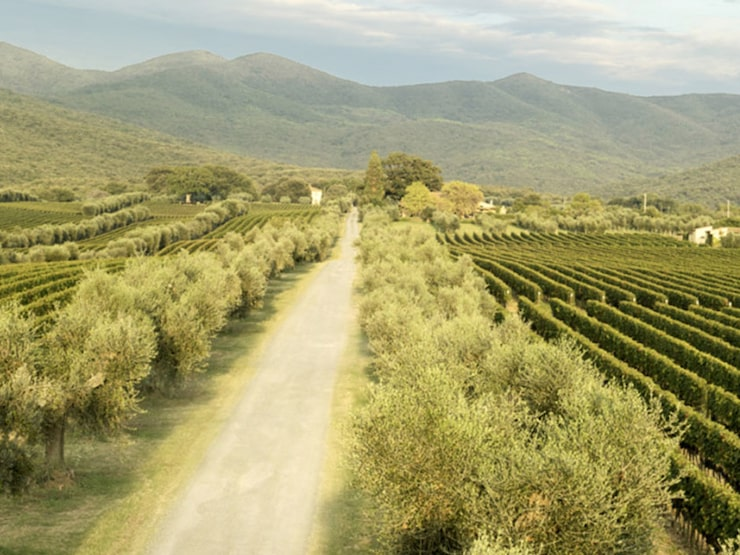 En 9-litersflaska från Tenuta dell'Ornellaia såldes en gång för drygt 3 miljoner kronor.