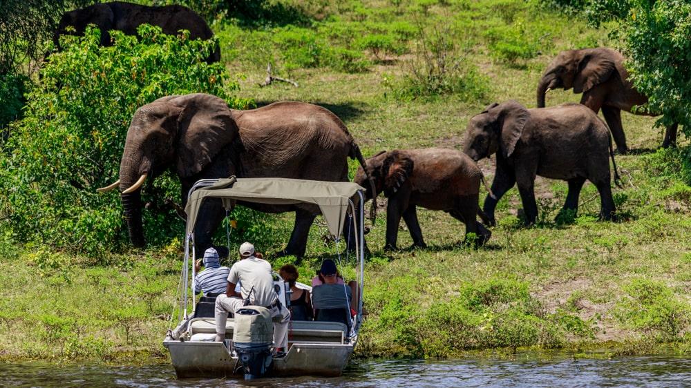 Botswanas elefanter lockar såväl fredliga turister som trofésugna jägare.