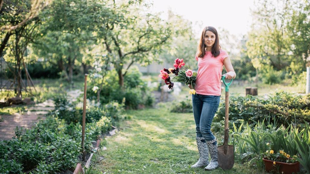 Krokus, tidiga tulpaner, vårstjärnor, pärlhyacinter, narcisser, kejsarkronor... Är du flitig med att plantera lökar och knölar nu kan du ha blommande lökväxter från mars in i juni.