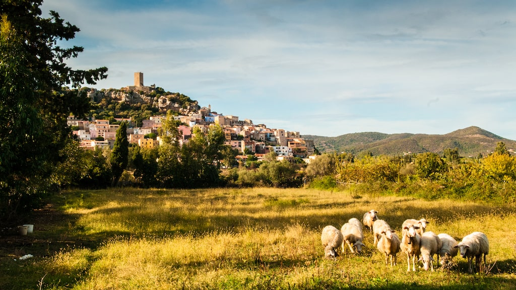 Får och getter är en välbekant syn på Sardinien, men så finns också tre miljoner får på ön.