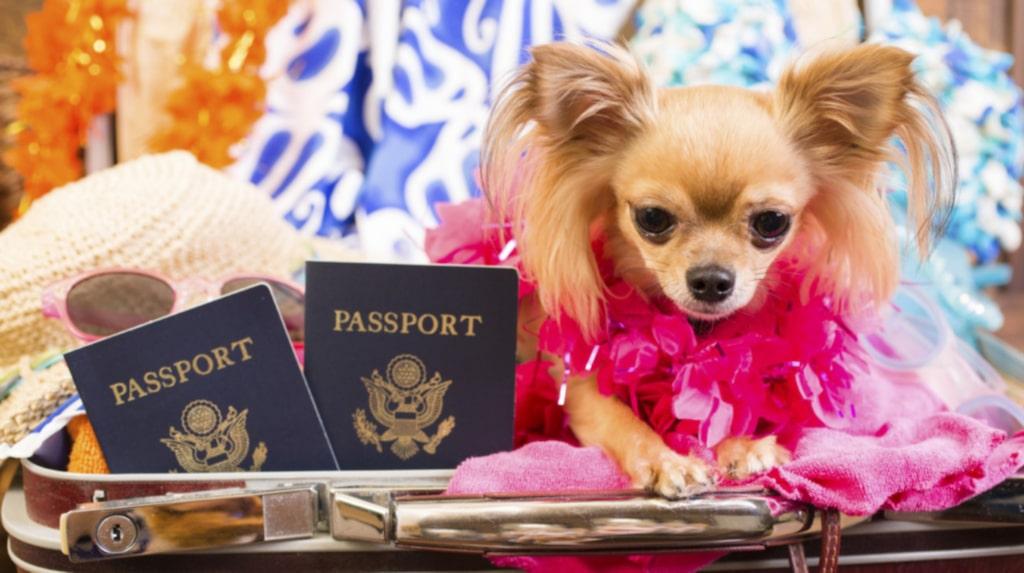 <p>Veterinärintyg eller EU-pass? Vad behöver din hund?</p>