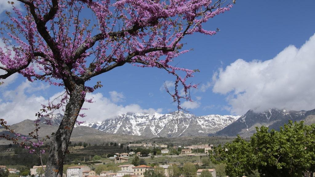 Bergsmassivet Monte Cinto i fonden under vandringen.