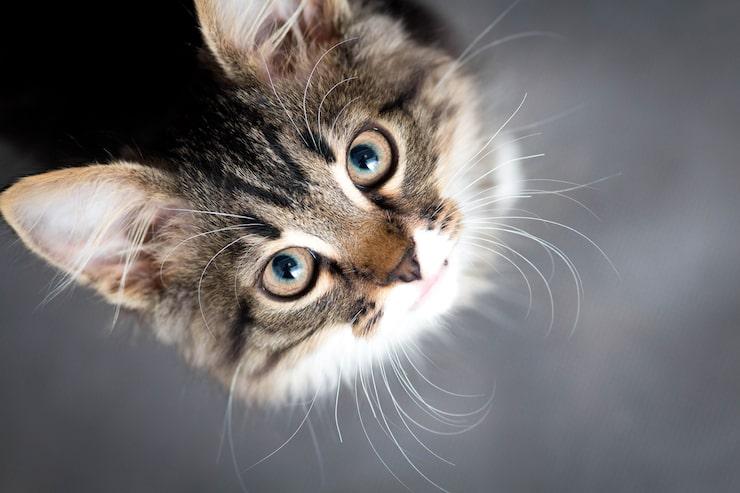 Katter kan vara svåra att motstå...