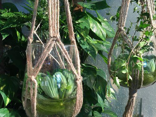 Gröna växter är fortfarande trendigt, och många amplar syns på trädgårdsmässan.