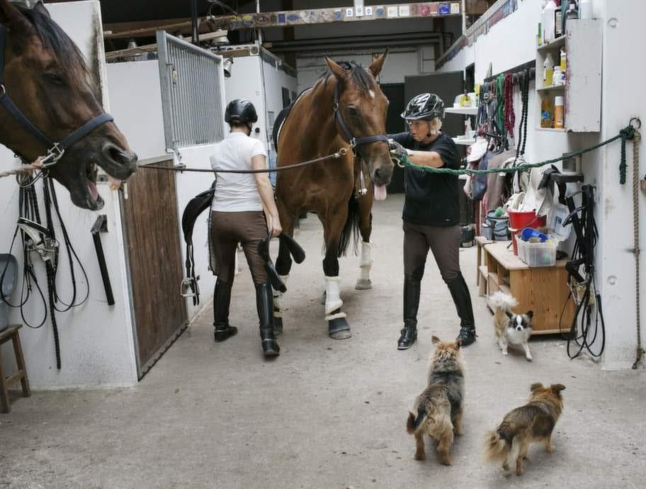 Louise kan, trots skadan, inte låta bli att jobba i stallet. Hästarna är Louises liv, vid sidan om familjen.