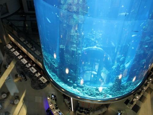 Radisson Blu Berlin har världens största cylindriska akvarium, Aqua Dom.