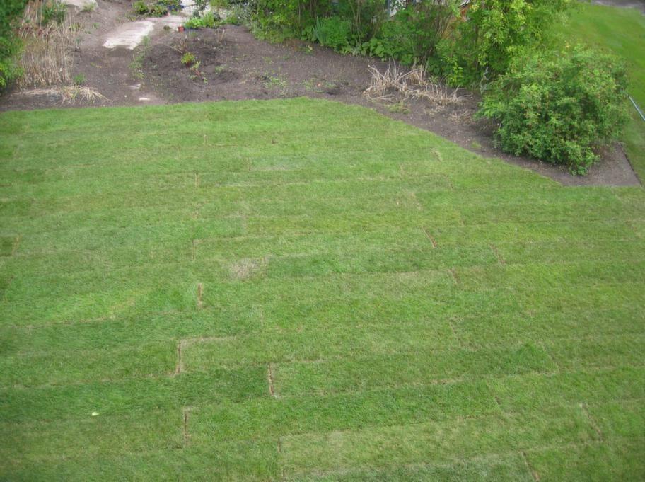"""STEG 10. Kontrollera.<br><span style=""""text-decoration: underline;"""">Efter 1 vecka.</span> Lyft försiktigt upp en bit och kontrollera om rötterna har börjat utvecklas. De ska då ha börjat växa ner i underlaget, det vill säga gräsmattan ska ha börjat växa sig fast! De nya rötterna är vita.<br>Partier som ligger i skugga kommer att rota sig lite senare än de som har sol 4-5 timmar per dag.<br>Fortsätt att vattna gräsmattan, minst tre gånger per vecka vid mulet väder, varje dag vid torrt och soligt väder. Tänk på att blåst snabbt torkar ut gräset.<br><span style=""""text-decoration: underline;"""">Efter 2 veckor.</span> Tål mattan att man går lite på den. Fortsätt att vattna gräsmattan regelbundet.<br><span style=""""text-decoration: underline;"""">Efter 3-4 veckor.</span> Fortsätt att regelbundet vattna gräsmattan."""
