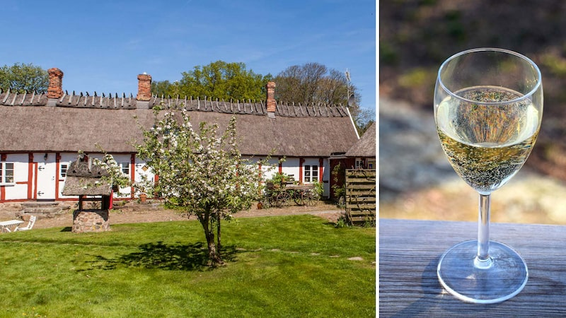 Arilds vingård i nordvästra Skåne är en av Sveriges största och mest uppmärksammade vingårdar. Där görs bland annat vitt vin på druvan solaris.