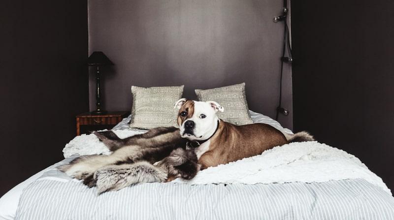 Bentley bor i lägenheten och enligt mäklaren vill de visa livet i bostaden och vem som bor och lever här.