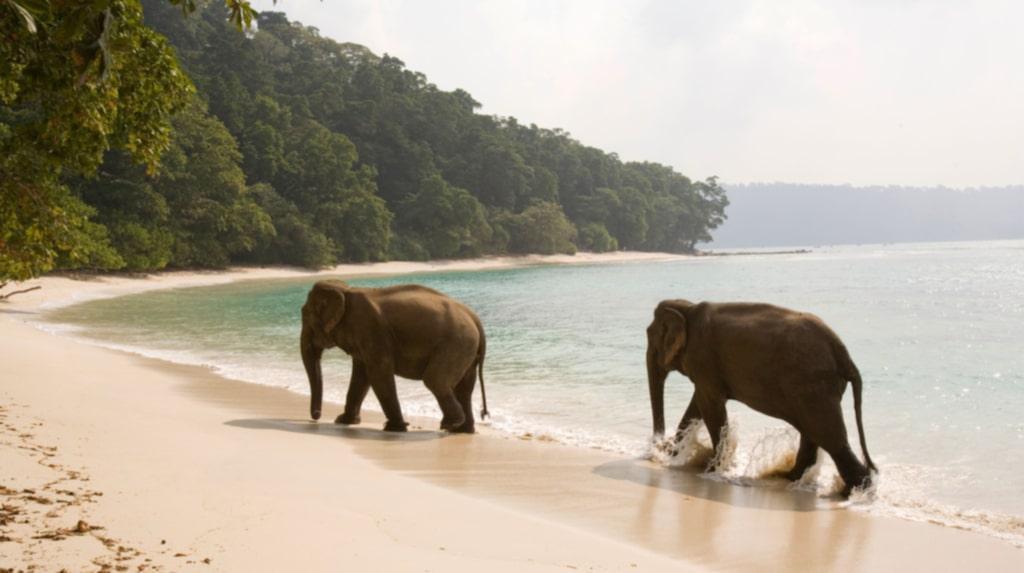 <p>På Havelock-stranden i Indien kan du skymta vilda elefanter.<br></p>