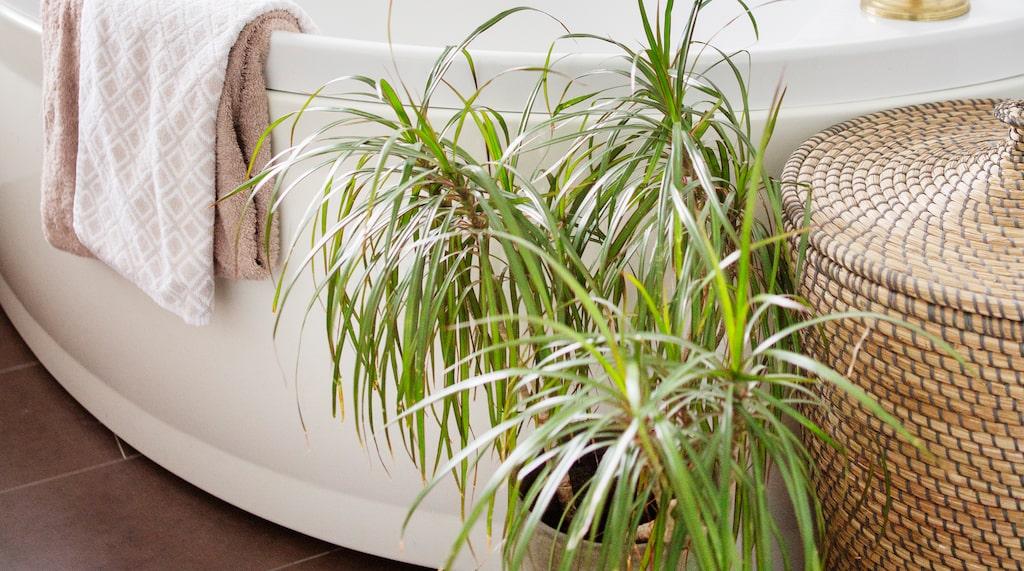 Badrummet är nyrenoverat. Även här finns gröna växter.