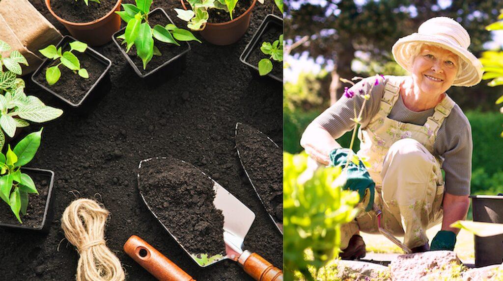 Testa dina kunskaper i trädgårdsquizet!