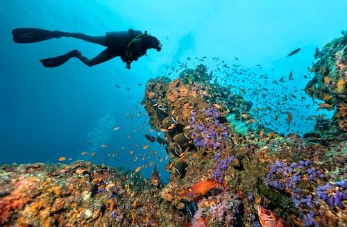 Dykningen håller världsklass på Maldiverna.