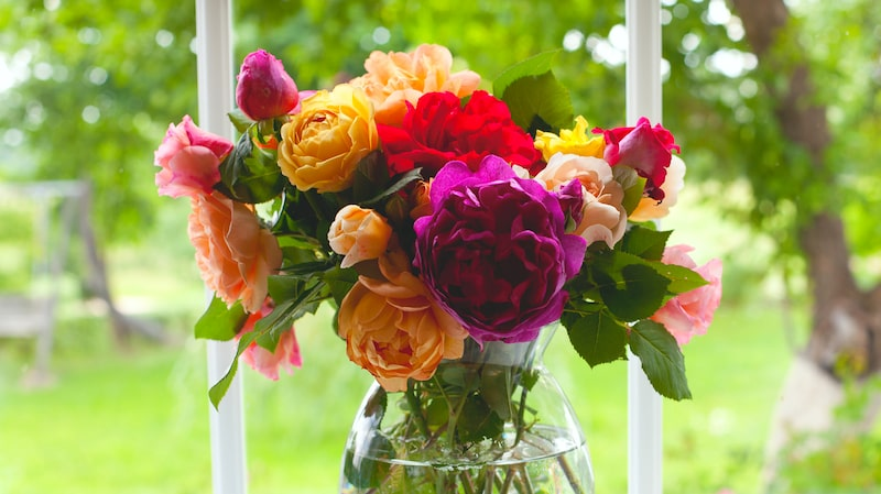 """""""När det gäller vedartade, så kallade hårda stjälkar, som körsbär, syrener, rosor och buskar från trädgården ska man alltid ha varmt vatten"""", säger floristen Malin Hidesäter."""