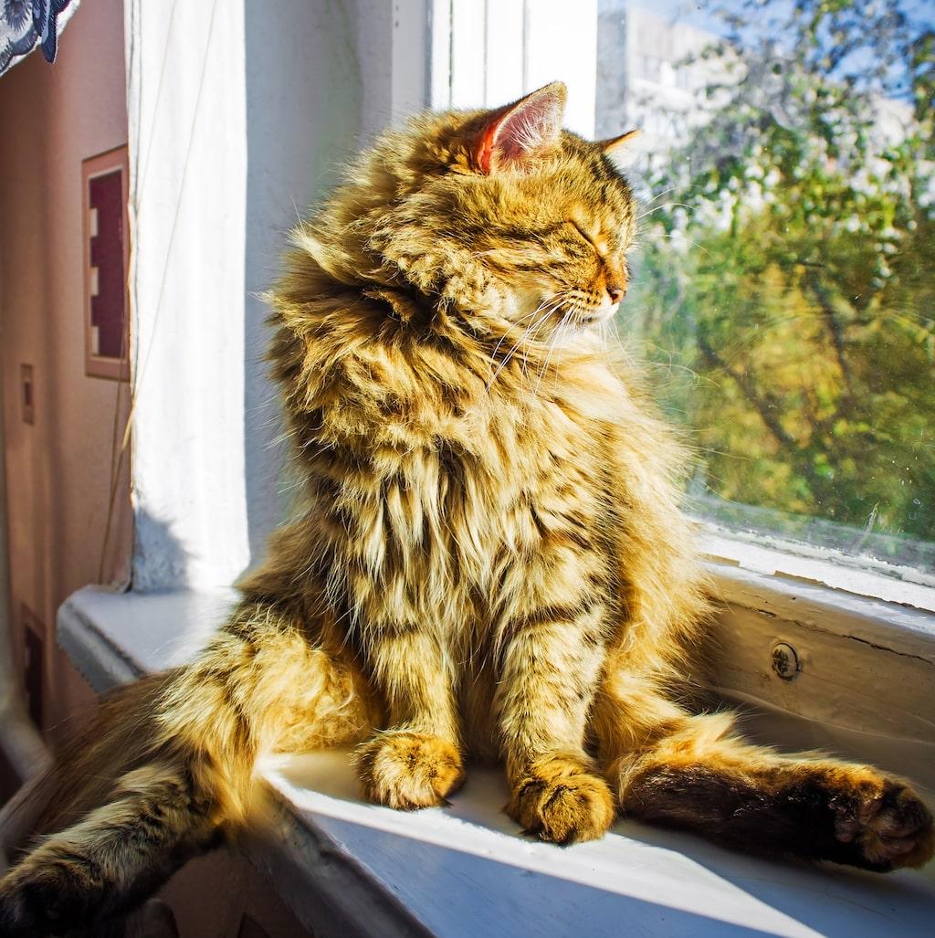 Liljor kan orsaka problem i njurarna hos katter, och problem med hjärtat hos både katter och hundar.