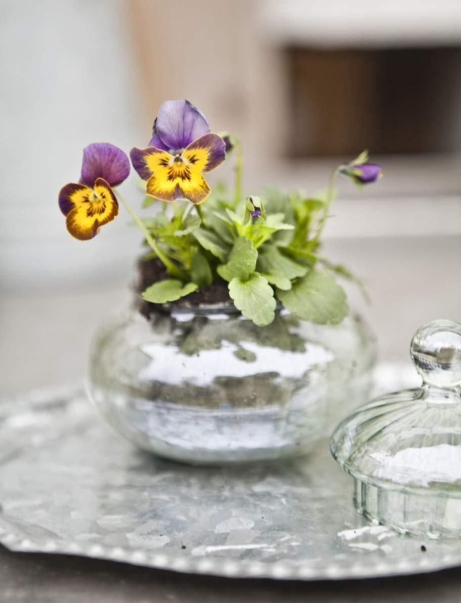 Glasskål med lock, 60 kronor, Blomsterlandet.