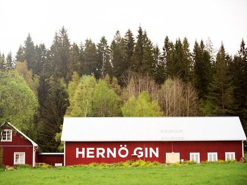Hernö gin har fått många fina internationella priser.