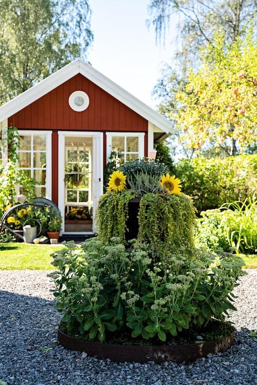 Framför entrén välkomnar planteringen fylld med perenner och sommarblommor, vackert inramad av rabattkanter i rostig plåt.