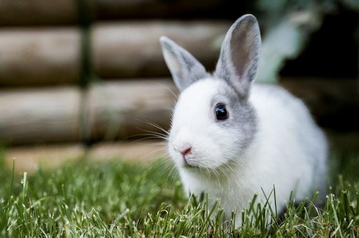 Kaniner kan leva länge.