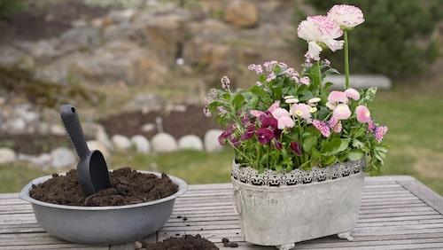 Lägg lecakulor i krukan, innan du fyller på med jord, så dränker du inte lika lätt blommorna.